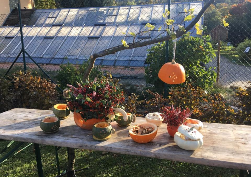 Dýňové slavnosti v Jeseníku